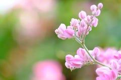 In selectieve nadruk een bos van zoete roze de bloembloesem van de koraalwijnstok met groene aardachtergrond royalty-vrije stock fotografie