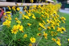 Selectieve Nadruk kleine bloemen in zomer bij natuurreservaat van Bangkok Thailand stock afbeelding