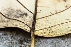 Selectieve nadruk op venation van gele blad macro dichte omhooggaande, abstracte creatieve achtergrond stock foto