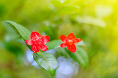 selectieve nadruk rode bloem onder zonneschijn, onduidelijk beeld bokeh Stock Fotografie