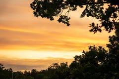 Selectieve nadruk van de mooie gouden hemel van de de zomerzonsondergang met bomen en tak in de voorgrond stock afbeeldingen