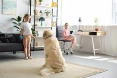 selectieve nadruk van kleine kinderen die met golden retrieverhond spelen stock fotografie