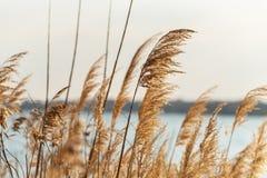 Selectieve zachte nadruk van strand droog gras stock foto's