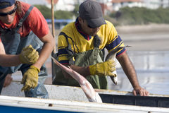 Selecting fishermen stock photography