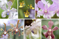 Selection beautiful orchid Stock Images