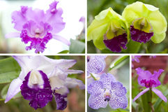 Selection beautiful orchid Stock Photo