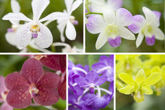 Selection beautiful orchid Royalty Free Stock Images