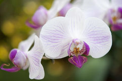 Selection beautiful orchid. On blur background. Selective focus royalty free stock photography