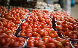 Selection of cherry tomatoes Stock Image