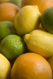 Selection Of Citrus Fruits Royalty Free Stock Photos