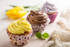 Selection of colorful cupcakes, white background stock image