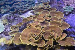 Selection of different corals stock image