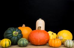 A Selection of Pumpkins, Winter Squash and Gourds. A selection of different winter squash, pumpkins, munchkins and gourds with a black background and copy space stock photos