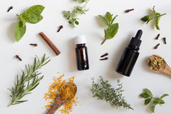 Selection of essential oils and herbs on a white background. Two bottles of essential oil with a selection of herbs on a white background - peppermint, basil royalty free stock image