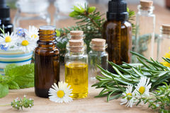 Selection of essential oils and herbs on a wooden background. Bottles of essential oil with a selection of flowers and herbs on a wooden background - melissa & royalty free stock photos