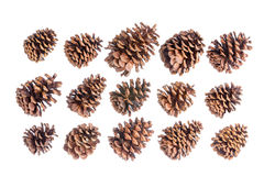 Selection of fifteen different brown pine cones Stock Photo