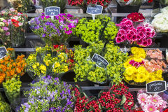 Selection of flowers on display Royalty Free Stock Photography