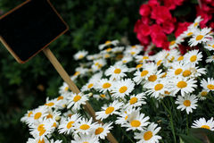 Selection of flowers Royalty Free Stock Photography