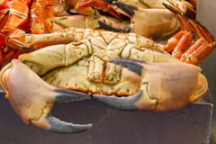 A selection of Fresh Crabs Stock Photography