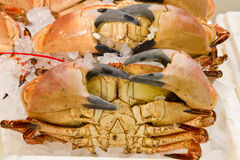 A selection of Fresh Crabs Stock Photo