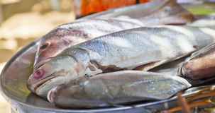 Selection of fresh fish on silver platter Royalty Free Stock Photos