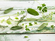 Selection of fresh herbs Stock Image