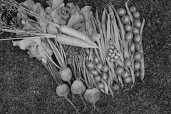 Selection of fresh produce from vegetable garden Stock Photo