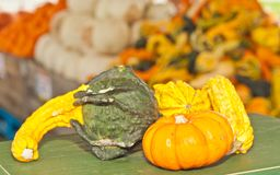Selection  of gourds and a mini pumpkin on a wood table Royalty Free Stock Image