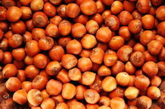 Selection of hazelnuts Stock Image