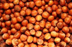 Selection of hazelnuts Stock Image