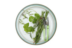 Selection of herbs on a plate Stock Image