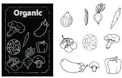 Selection of Organic vegetables Stock Photo