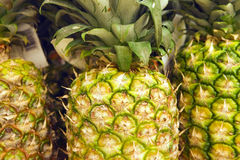 Selection of pineapples on display on market stall, close-up (full frame) Royalty Free Stock Photography