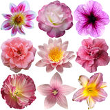 Selection of Pink Flowers Royalty Free Stock Images