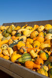 Selection of Pumkins Royalty Free Stock Photography