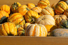 Selection of Pumkins Royalty Free Stock Images
