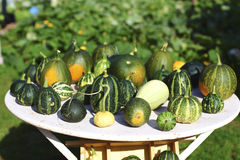 Selection pumpkin and zucchini Stock Photos