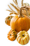 Selection of pumpkins, wheat. Isolated on white Stock Photography
