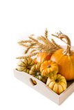 Selection of pumpkins, wheat. Isolated on white Stock Image