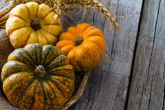 Selection of pumpkins, wheat. Rustic wood background Royalty Free Stock Images