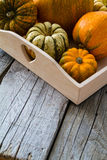 Selection of pumpkins, wheat. Rustic wood background Stock Images