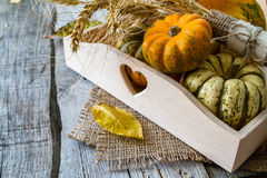 Selection of pumpkins, wheat. Rustic wood background Stock Photos