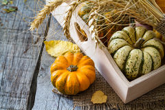 Selection of pumpkins, wheat. Rustic wood background Stock Photo