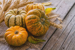 Selection of pumpkins, wheat. Rustic wood background toned Royalty Free Stock Images