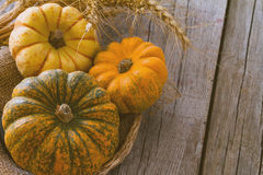 Selection of pumpkins, wheat. Rustic wood background toned Stock Photos