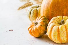 Selection of pumpkins, wheat. White wood background Stock Photos