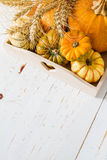 Selection of pumpkins, wheat. White wood background Royalty Free Stock Image
