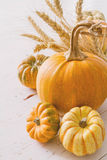 Selection of pumpkins, wheat. White wood background toned Royalty Free Stock Image