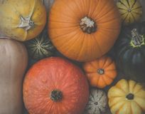 A Selection of Pumpkins, Winter Squash and Gourds. Looking down from above onto a selection of different winter squash pumpkins, munchkins and gourds with a royalty free stock images