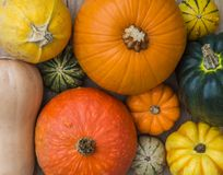 A Selection of Pumpkins, Winter Squash and Gourds. Looking down from above onto a selection of different winter squash pumpkins, munchkins and gourds with a stock photo